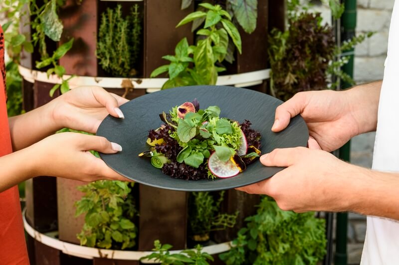 Friss növények hidropóniából