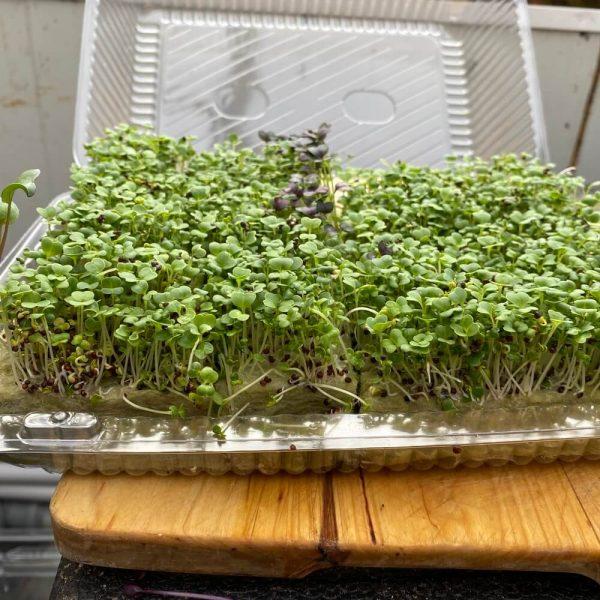 Zöld mizuna