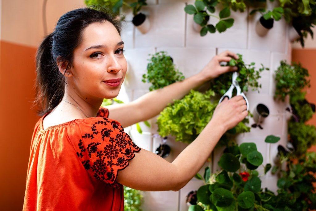 Növényszüret Green Drops növénytermesztő toronyról