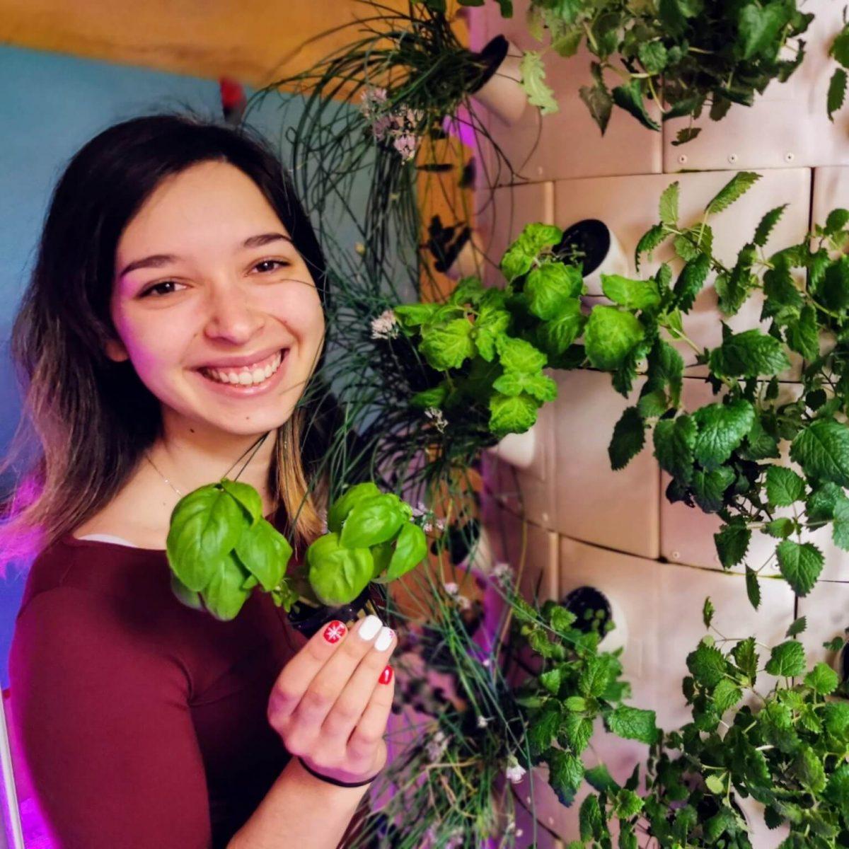 Hidropónikus növénytermesztés tanfolyam
